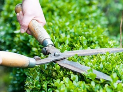 Top 5 tools for pruning the garden